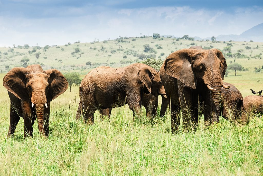 Elephants at Kidepo National Park, Uganda, Africa on Mallory on Travel adventure travel, photography, travel