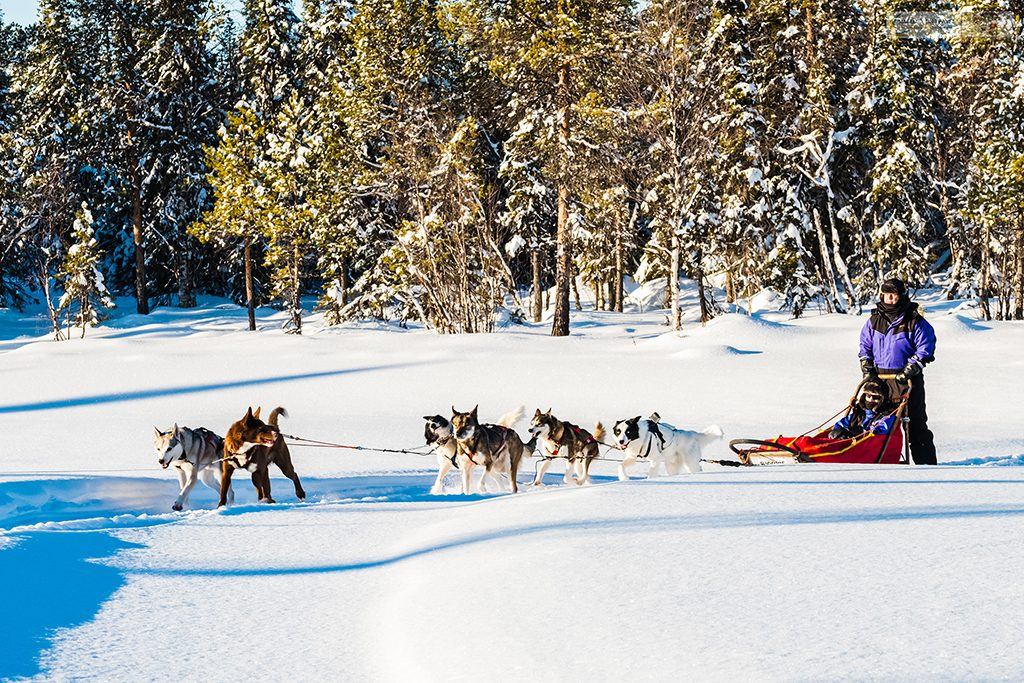 Dog sledding in the winter wonderland of Lappeasuando, dog sledding in Swedish Lapland, the far north of Sweden, within the Arctic Circle on Mallory on Travel adventure travel, photography, travel Iain Mallory_Lapland-1-219