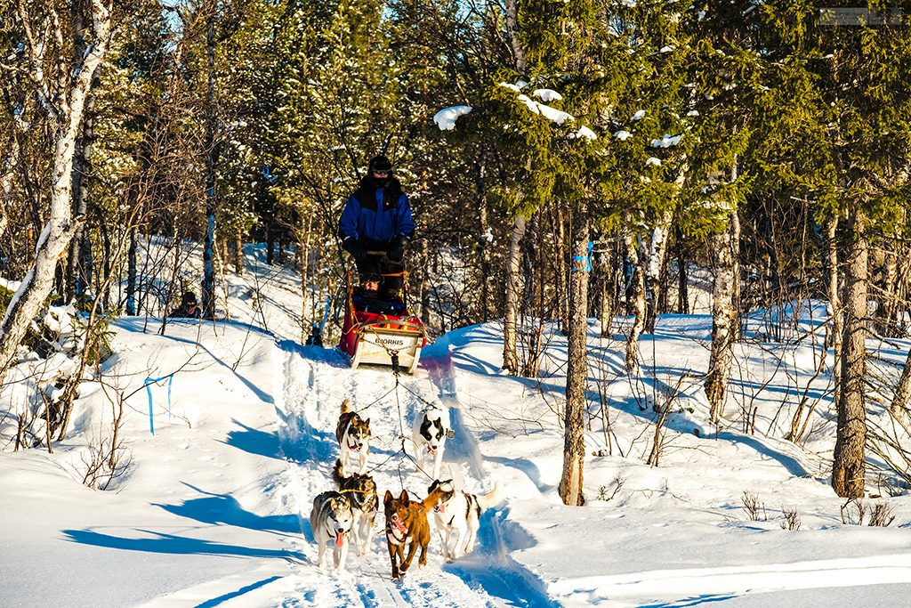 Dog sledding in the winter wonderland of Lappeasuando, dog sledding in Swedish Lapland, the far north of Sweden, within the Arctic Circle on Mallory on Travel adventure travel, photography, travel Iain Mallory_Lapland-1-232