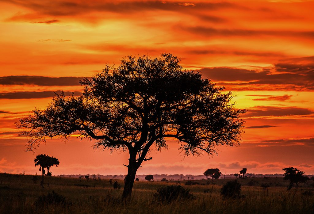 Sunrise at Kidepo National Park, Uganda, Africa on Mallory on Travel adventure travel, photography, travel